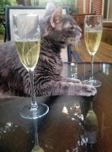 cat with champagne