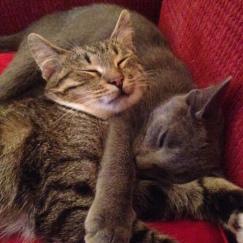 SC 2 kittens