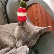 Christmas kitty ziggy