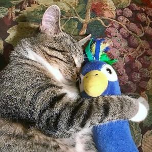 Artie with blue bird